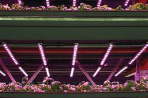 Illumitex LED lighting for plants